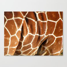 Giraffe Skin Close-up Canvas Print