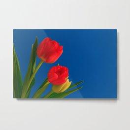 Three Tulip Flowers on Blue Background Metal Print
