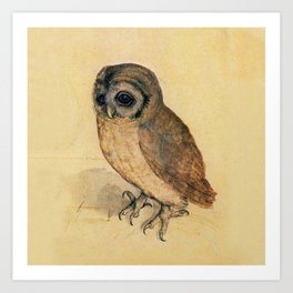 Albrecht Durer The Little Owl Art Print