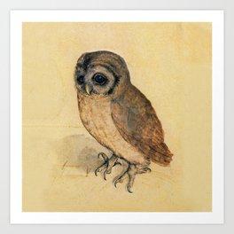 Albrecht Durer The Little Owl Kunstdrucke
