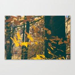 Fall's Web Canvas Print
