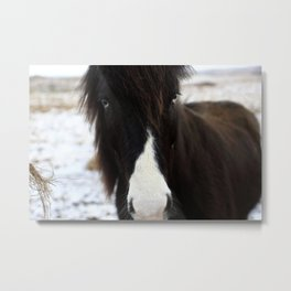 Blue Eye Icelandic Horse Metal Print