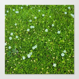 A Piece of Nature Canvas Print
