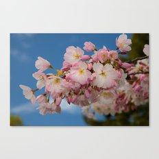 Cherry Blossoms (Edit 1) Canvas Print