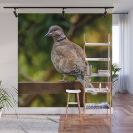 Collared Dove Wall Mural