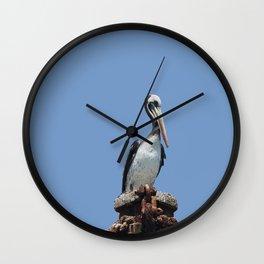 Peruvian pelican (Pelecanus thagus) Wall Clock