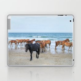 Outer Banks, Corolla, NC, Stallion and his Harem Matted Print Laptop & iPad Skin