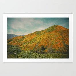 California Poppies 023 Art Print
