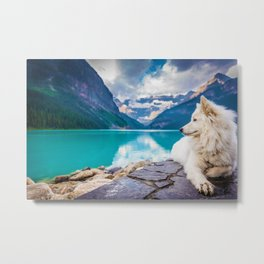Wolf in Paradise (Color) Metal Print