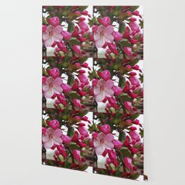 Spring blossoms - Strawberry Parfait Crabapple Wallpaper