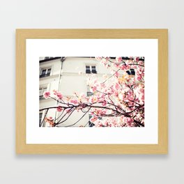 Cherry blossoms in Paris, Facades Framed Art Print