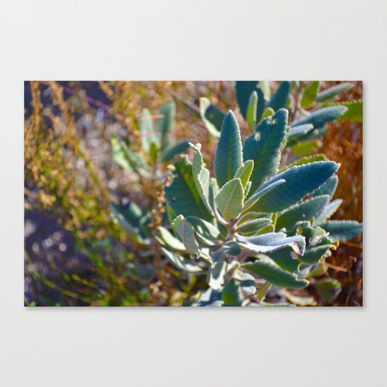 Mountain Blossom Canvas Print