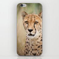 cheetah iPhone & iPod Skins featuring Cheetah by Simon's Photography