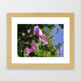 Rose of Sharon Framed Art Print