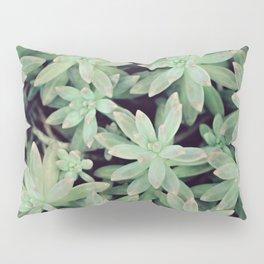 Succulent Abstract Pillow Sham