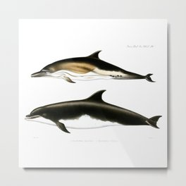 Vintage dolphins nautical porpoise whale antique beach house dolphin print Metal Print