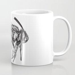 Anthophora Affabilis - Native Bee Coffee Mug