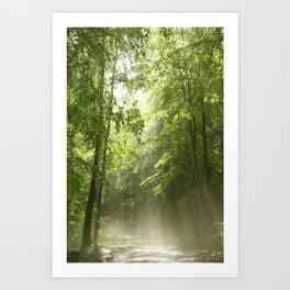 Spring Forest Mist Art Print