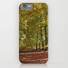 Autumnal beech trees in a natural woodland. Norfolk, UK. iPhone 6s Slim Case