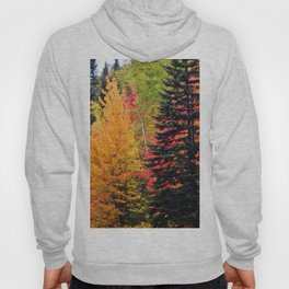 Deep in the Forest (Fall Colors) Hoody
