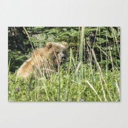Bear Cub with Wet Face Canvas Print