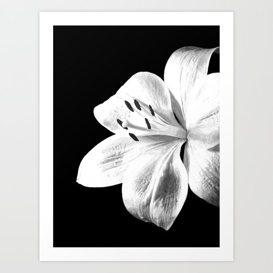 White Lily Black Background by alemi