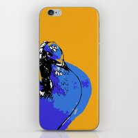 pigeon iPhone & iPod Skins featuring Pigeon by Aimee St Hill