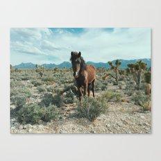 Nevada Desert Horse Canvas Print
