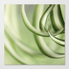 Houseplant Canvas Print