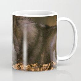 A wolf lying in the evening sun Coffee Mug