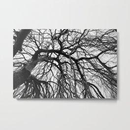 Tree in b&w Metal Print