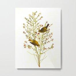 Orange-crowned Warbler Bird Metal Print