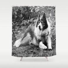 greenland dog Shower Curtain