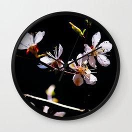 Impressive, Elegant Japanese Apricot Flowers Against The Black Background Wall Clock
