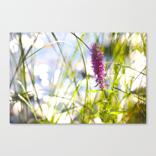 Pink Flower At the Beach Canvas Print