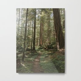 Wonderland Forest Trail Metal Print