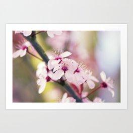 Pink Sakura - Cherry Blossom - Floral Art Art Print