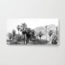 Palm Canyon near Palm Springs c.1901 Metal Print