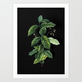 Vintage Broadleaf Spindle Botanical Illustration on Black (Portrait) Art Print