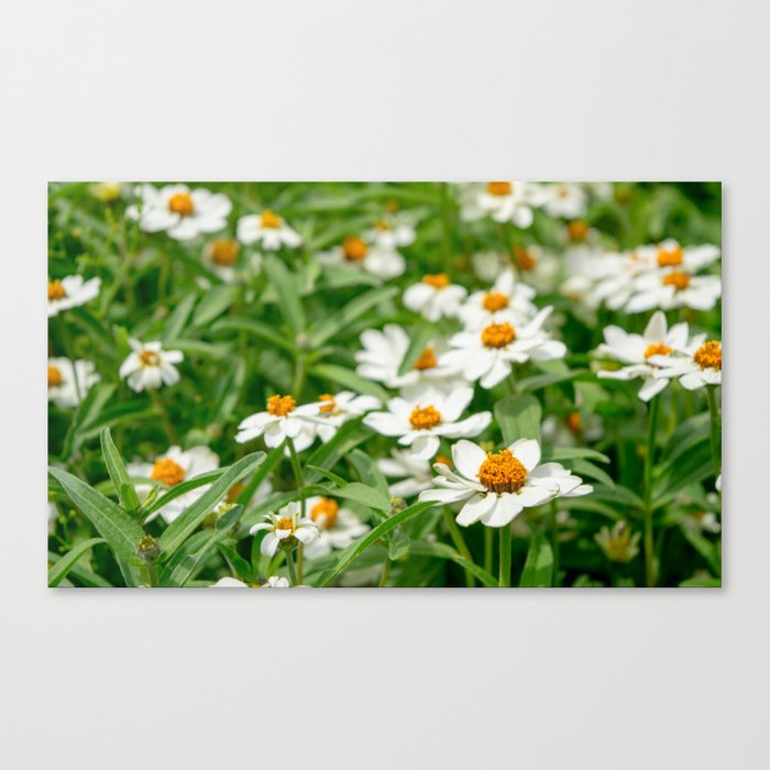 Take Me Where the Flowers Bloom Canvas Print
