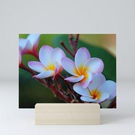 White Plumeria Mini Art Print