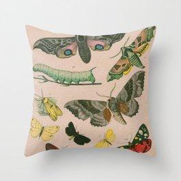 Moths & Caterpillars Throw Pillow