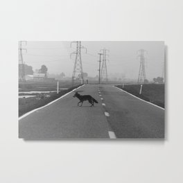 Coyote on the Levee Metal Print