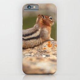Squirrel Resting iPhone Case
