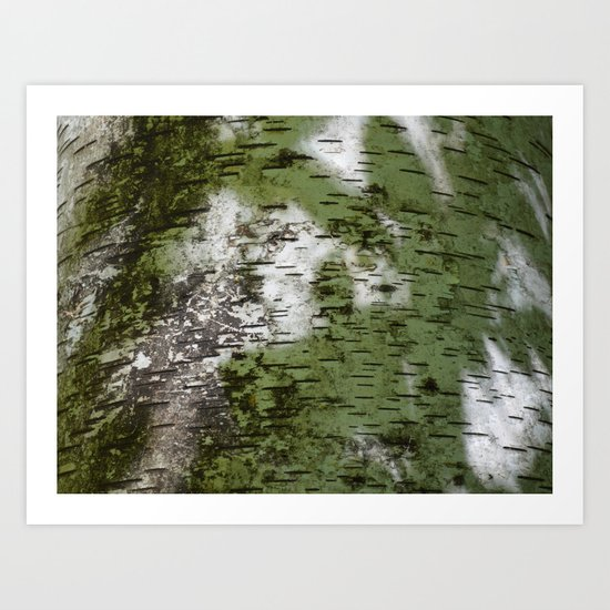 Birch Bark Pattern Green and White Wood Pattern Bring the Outdoors In by theoldbarndoor