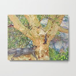 Squirrel Fever Metal Print