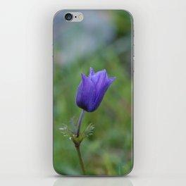 Lone Blue-Purple Anemone iPhone Skin