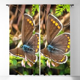 Common Blue Butterfly Polyommatus Icarus Blackout Curtain