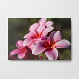 Kaupo Summer Treasure Metal Print