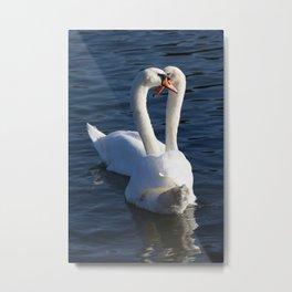 Swan Courtship  Metal Print